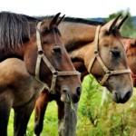 entsorgung pferdemist, Entsorgung von Pferdemist in Deutschland