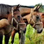 pferdemist entsorgung, Pferdemist Entsorgung