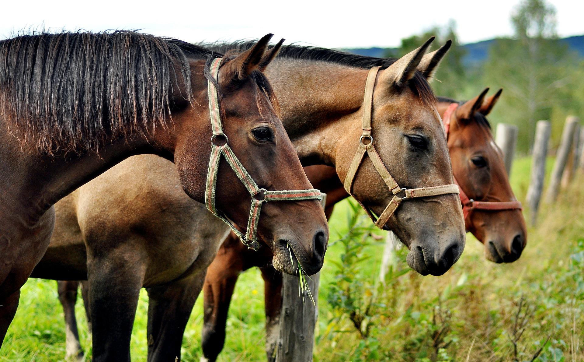 pferdemist entsorgung