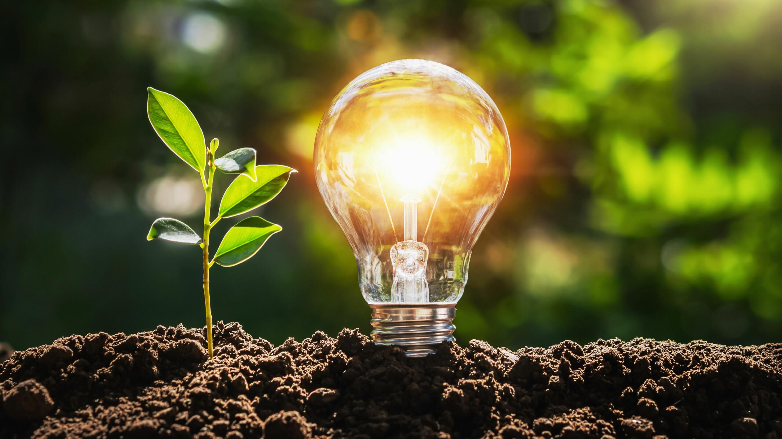 Biogas Investition